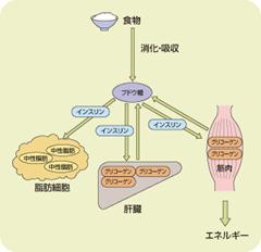 糖尿病の基本